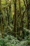 Kostarika fotografie