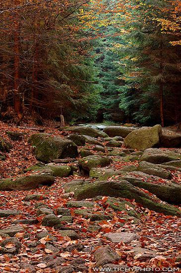 Šumava (Kamené moře)
